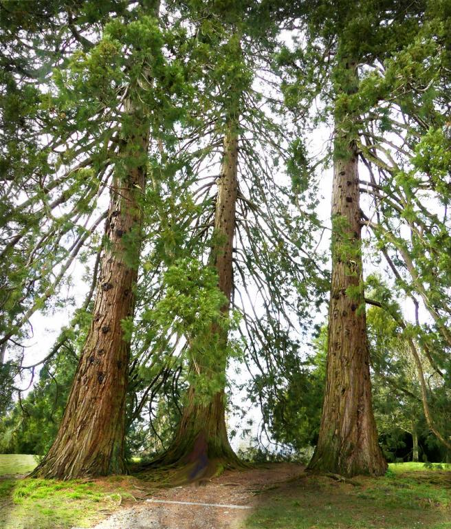 3 sequoias bagnoles